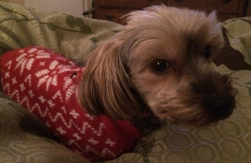 Sally.WinterSweater